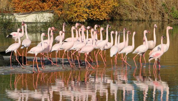 ZOOM Erlebniswelt - Flamingos Winterquartier