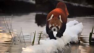 Wintereinbruch 2015 in München: Tierpark Hellabrunn bereitet sich für kalte Tage vor