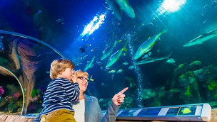 SEA LIFE Oberhausen - Blick ins Aquarium