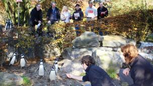 Wie leben Pinguine alleine? Studierende forschen im Zoo Osnabrück – Ausstellung für Besucher
