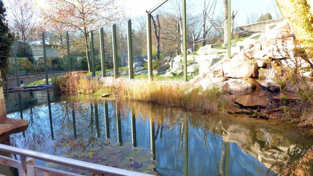 Stör-Becken im Tierpark Hellabrunn