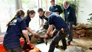 Zoo Karlsruhe – Riesenschildkröten ins neue Exotenhaus eingezogen