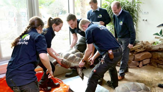 Zoo Karlsruhe - Ankunft der Schildkröten im Exotenhaus