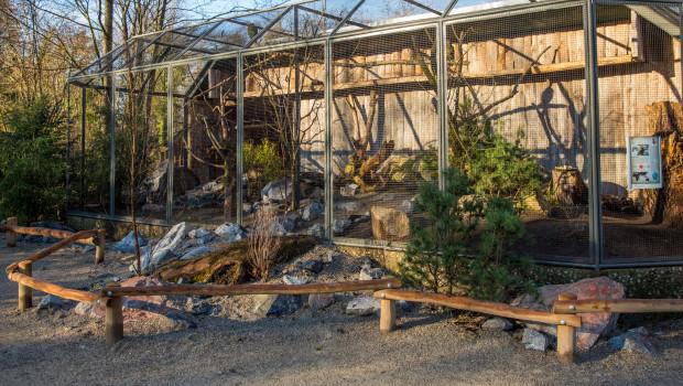 Kea-Voliere im Tierpark Hellarbunn