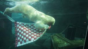 Erlebnis-Zoo Hannover - Eisbären-Spielzeug