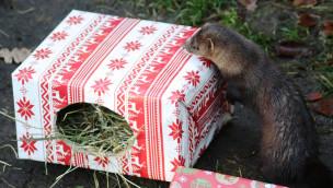 Zoo Osnabrück – tierische Bescherung und erstmals Kindergottestdienst am 24. Dezember 2015