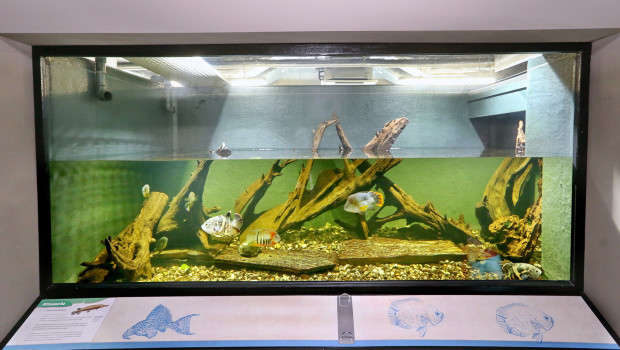Aquarium Zoo Karlsruhe Urzustand