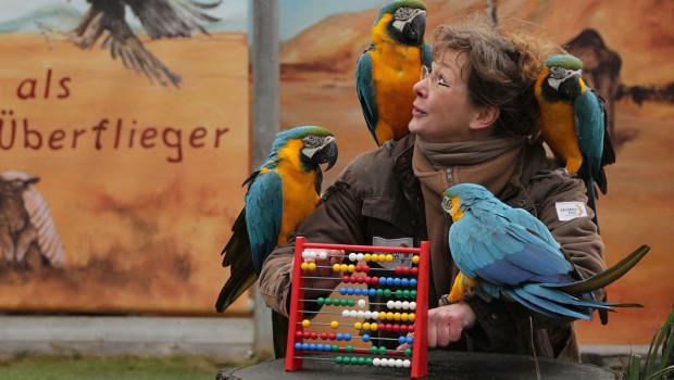 Erlebnis-Zoo Hannover Inventur 2016 Papageien