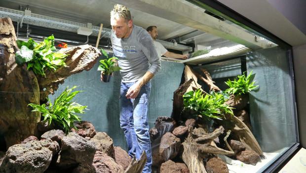 Oliver Knott, Aquascaper, gestaltet Exotenhaus im Zoo Karlsruhe