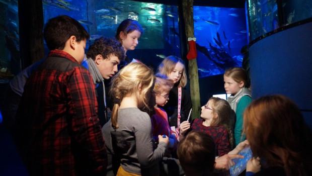 SEA LIFE Oberhausen - Fische zählen 2016