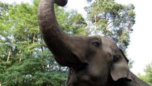 Elefant im Zoo Cottbus