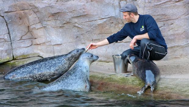 Zoo Karlsruhe Seehund-Fütterung