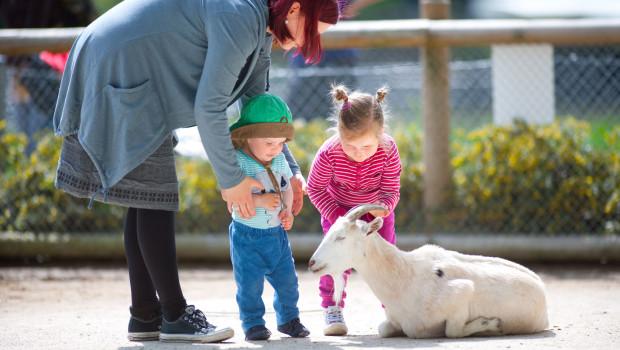 Zwergziegen im Zoo Karlsruhe streicheln