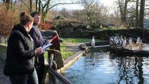 Zoo Osnabrück Inventur der Pinguine