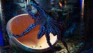 Oktopoden und Kraken sind am 15. März 2016 ins SEA LIFE Oberhausen eingezogen