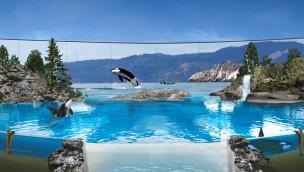 SeaWorld stellt Orca-Zuchtprogramm ein: Letzte Generation der Wale in den Parks