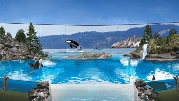 SeaWorld keine Orcas mehr