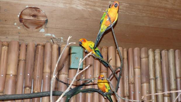 Sonnensittiche im Zoo Karlsruhe