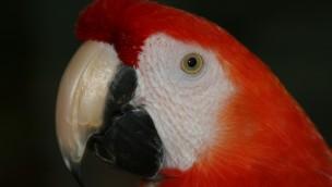 Zoo Karlsruhe bietet Bleibe für Pippi-Langstrumpf-Papagei und Gefährtin an