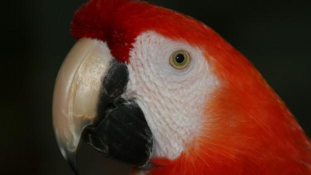 Hellroter Ara - Zoo Karlsruhe