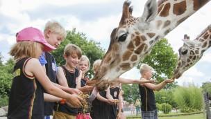 Jaderpark - Giraffe füttern