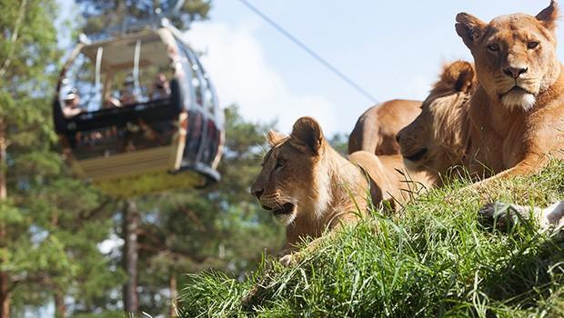 Kolmården Tierpark