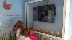 Freizeitpark Lochmühle Tierkinderstube