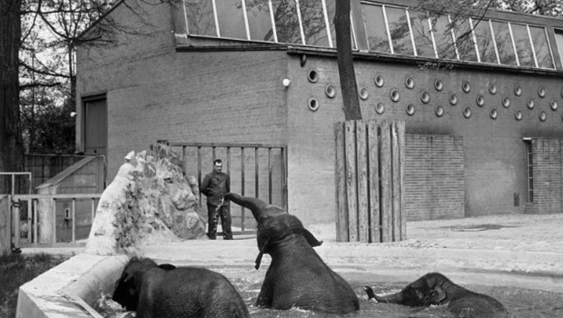 Zoo Karlsruhe Elefanten 1958