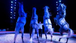 Circus Belly Wien - Pferdedressur