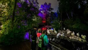 """Erste """"Lange Nacht"""" im Tierpark Hellabrunn war 2016 trotz Regen ein Erfolg"""
