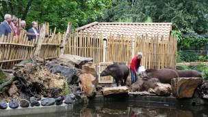 Zoo Osnabrück eröffnet vergrößtere Außenanlage für südamerikanische Vierer-WG