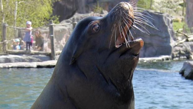 ZOOM Erlebniswelt Seelöwe gestorben 2016
