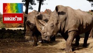 Burgers' Zoo in Niederlande günstiger besuchen: Ticket-Angebot mit 30 % Rabatt sichern!