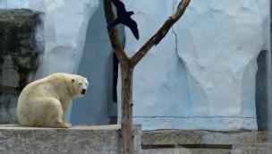 Strahlende Gletscherlandschaft für Karlsruher Eisbären: Eisfelsen im Zoo erneuert