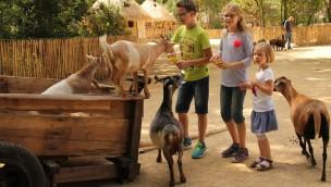 Erlebnis-Zoo Hannover mit neuer afrikanischer Streichelwiese: Sambesi Kraal eröffnet