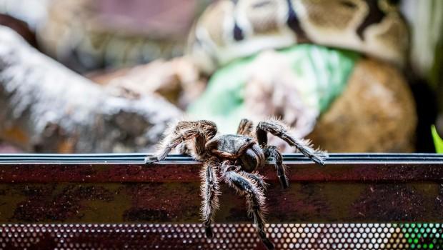 Hellabrunn Entdeckerhöhle - Spinne