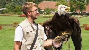 Weißkopfseeadler Lady im Weltvogelpark Walsrode mit Tiertrainer Michael Lenzgen