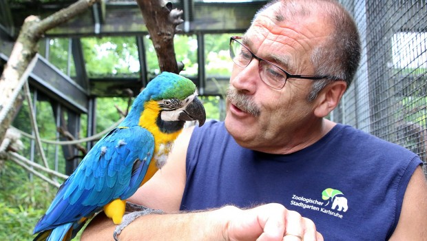 Zoo Karlsruhe - Gelbbrust-Ara Coco mit Pfleger