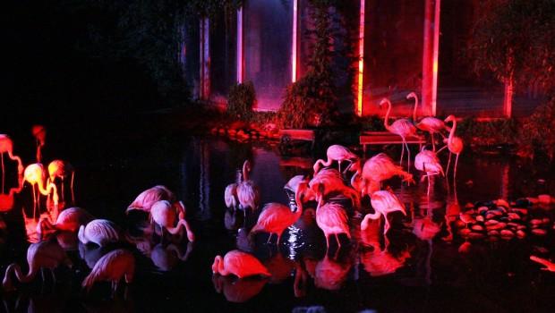 Flamingos im Zoo Osnabrück bei Nacht