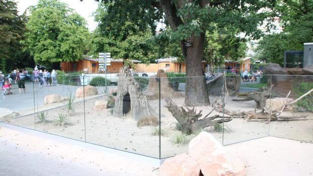 Erdmännchen-Gehege Zoo Karlsruhe