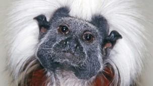 Die Affen sind los: Viele Neuheiten im Exotenhaus im Zoo Karlsruhe