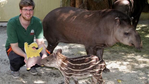Zoo Osnabrueck - Pokemon Week Verlängerung 2016