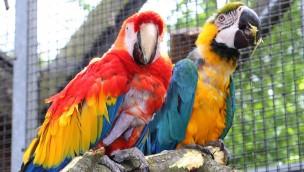 """Gelbbrust-Ara """"Gojan"""" im Zoo Karlsruhe überraschend gestorben"""