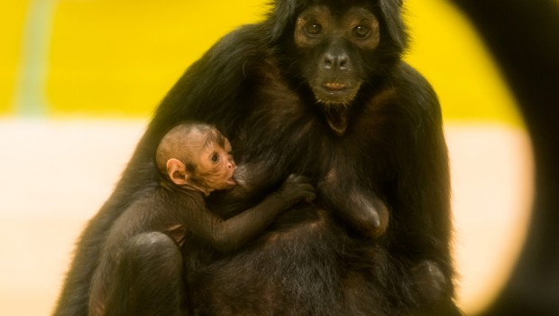 (Foto: Tierpark Hellabrunn / Jörg Koch)