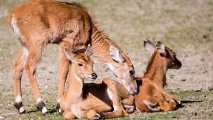 Hellabrunner Herbstkinder: 2016 viele Jungtiere im Tierpark Hellabrunn im Herbst zu entdecken