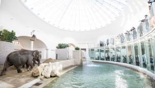 Elefantenhaus in Hellabrunn eröffnet: Münchner Tierpark hat sein Wahrzeichen wieder