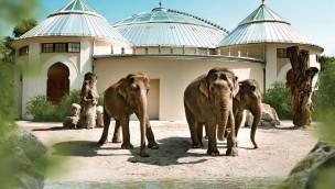 Neues Elefantenhaus in Hellabrunn: Eröffnung für 28. Oktober 2016 im Münchner Tierpark angekündigt