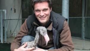 Flamingo-Küken im Zoo Osnabrück: Handaufzucht erkundet das Gehege