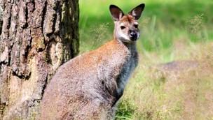 Naturwildpark Granat günstiger: Bis zu 53 % Rabatt auf das Familien-Tagesticket