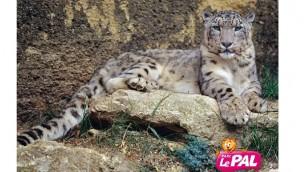 Le Pal bricht 2016 Besucherrekord und kündigt neue Tierarten für 2017 an